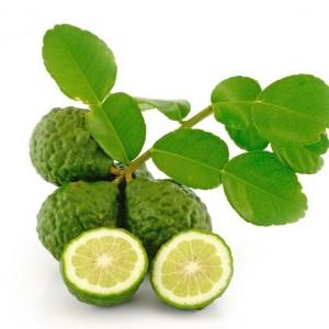 kaffir Lime -  সিলেটের সাতকরা